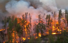 Wildfires: firefighters from two Australian states leaving to Canada